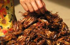 jedzenie-owadów