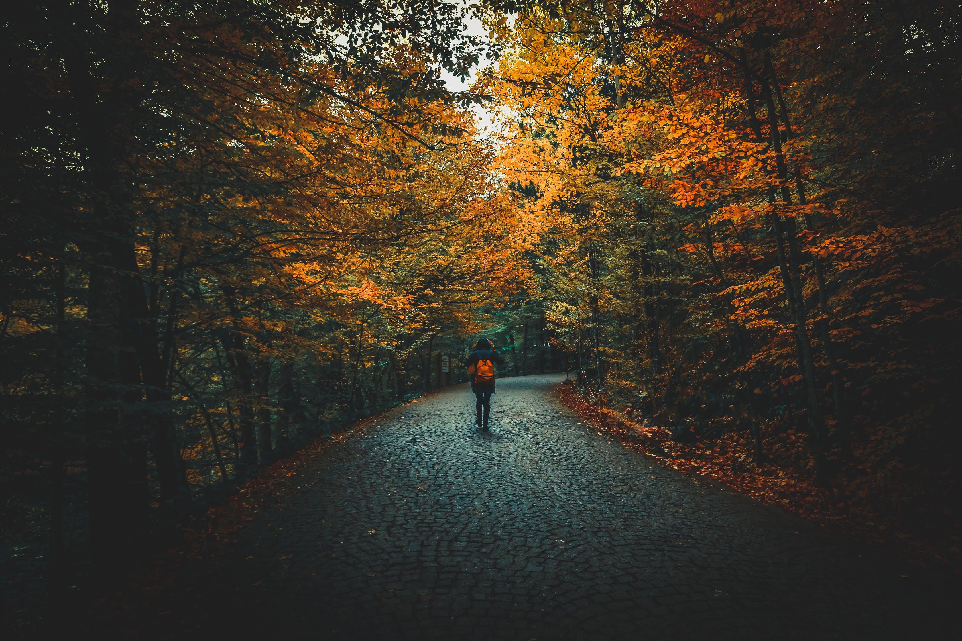 jesień2